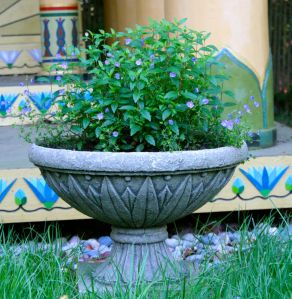 One of two lotuses planters in front of the temple; this year, we have speedwell growing, other years, it was grasses