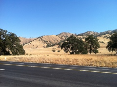 This photo does not capture the richness of this scene. In October, the hills of northern California are golden and punctuated with the deep dusty green of the low trees.