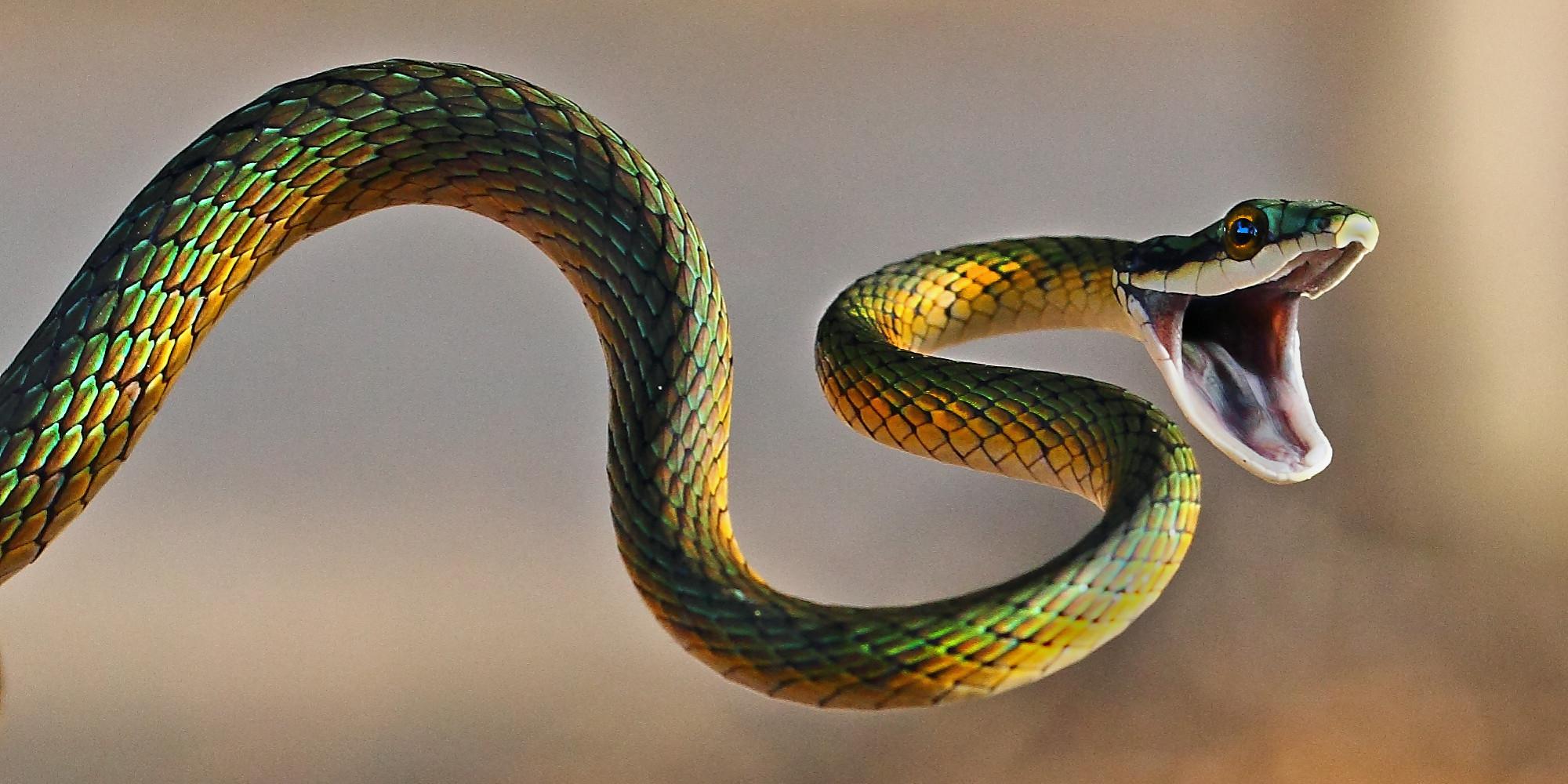 snake - photo #3