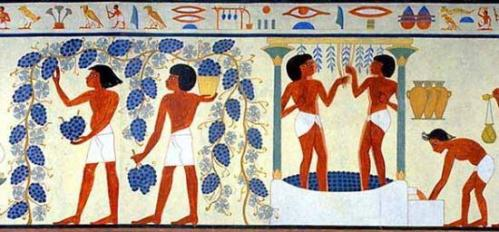 Egyptian grape harvest and winemaking
